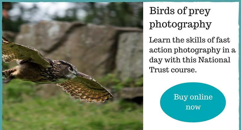 birds of prey photography gift experience Cotehele