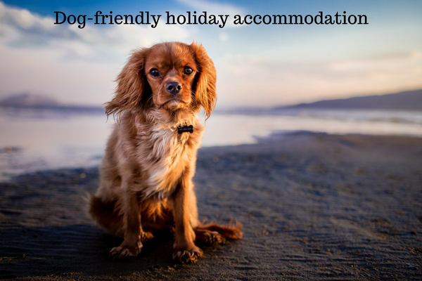 dog-friendly holiday accommodation near Padstow Cornwall
