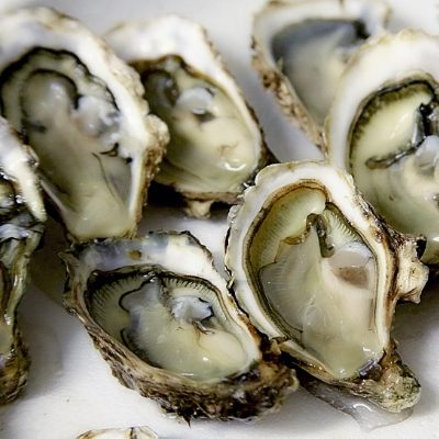 Ocean Blue what's on in Cornwall Rock Oyster Festival