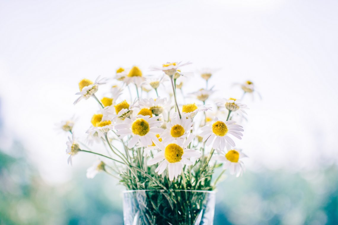 daisies by rodion-kutsaev on unsplash