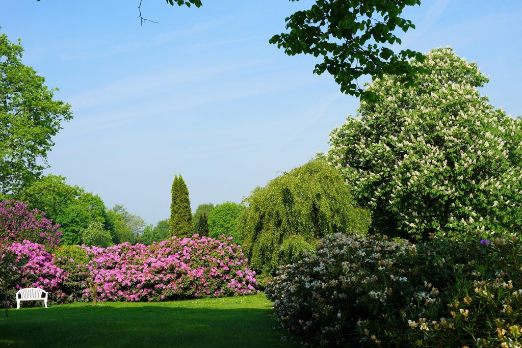 rhododendron-garden-spring from pixabay