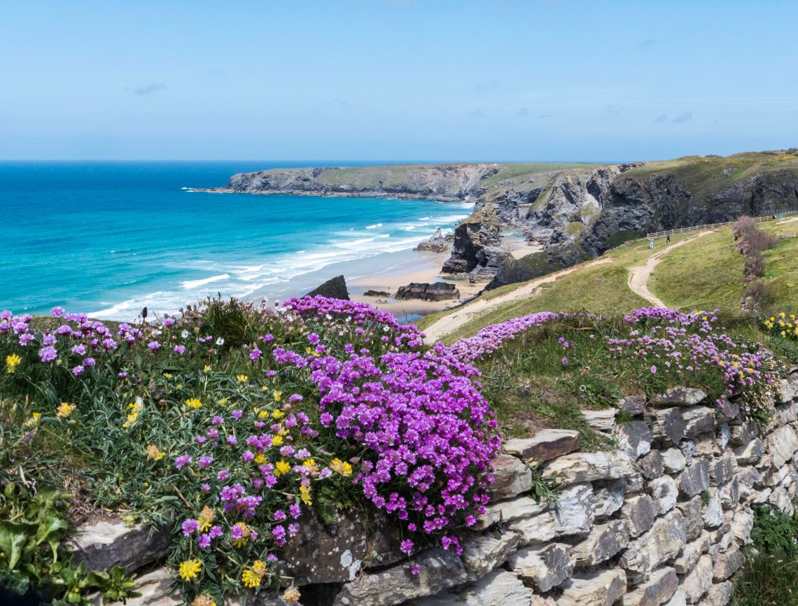 Colourful flowers at Bedruthan, Cornwall